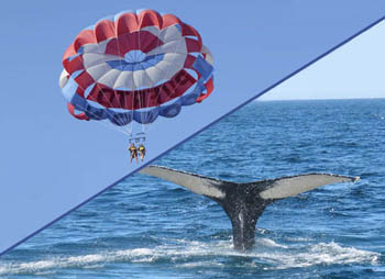 Parascending + Whales Watching